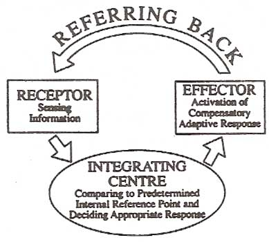 Referring Back diagram